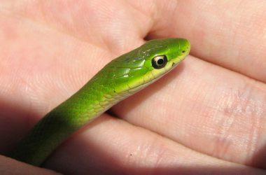 Best Green Snake