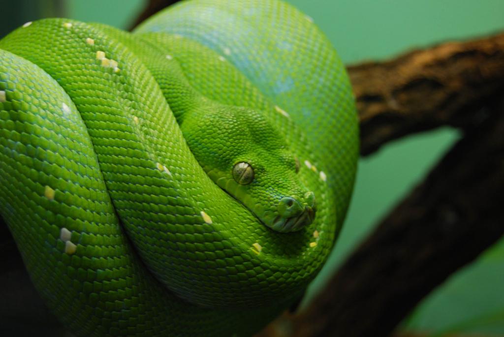 Danger Green Snake