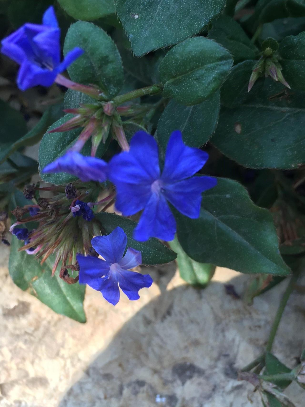 Gardening Blue Flower