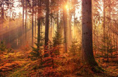 Natural Autumn Wallpaper