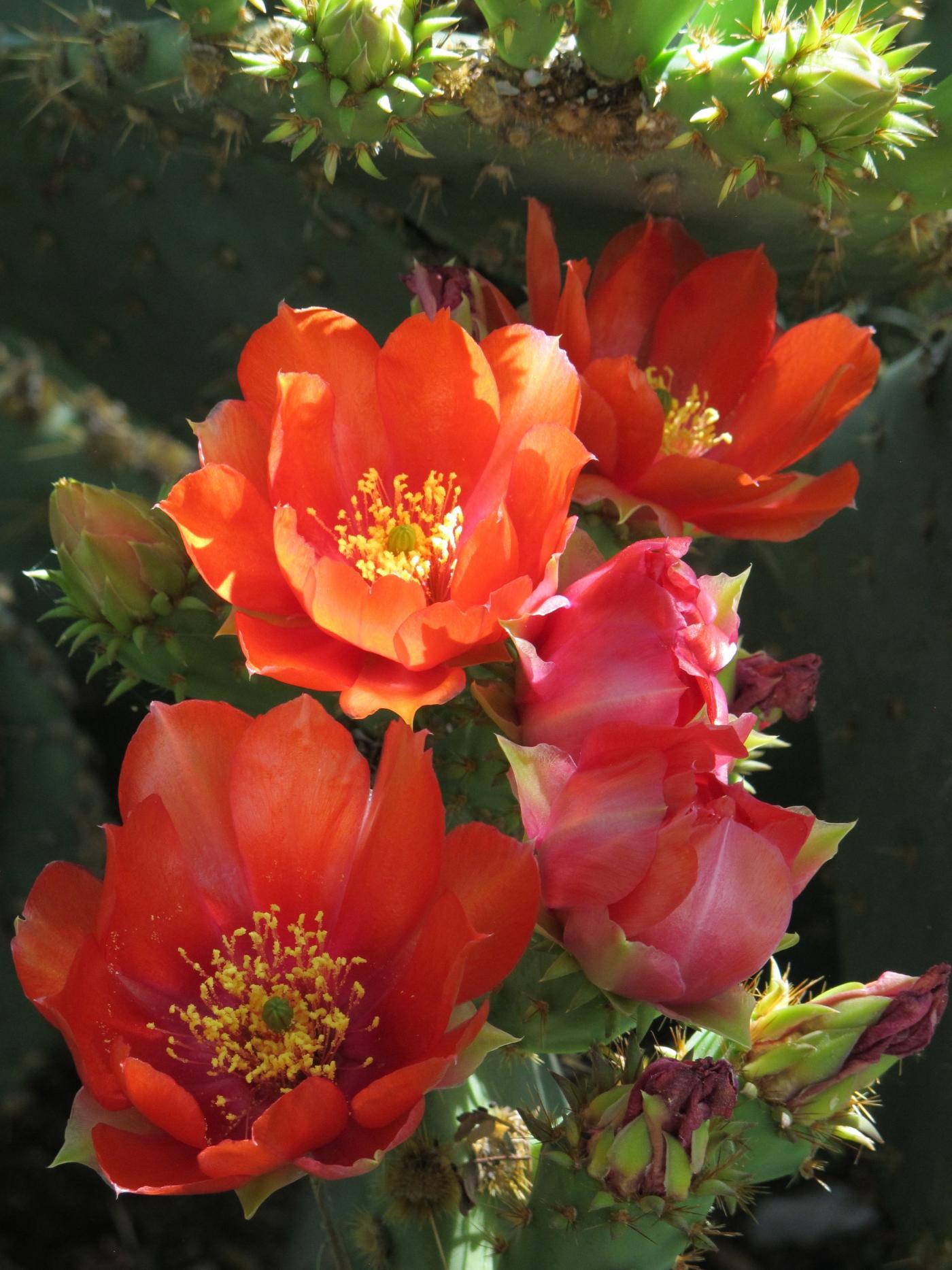 Nice Cactus Flower
