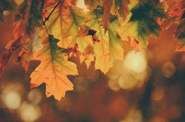 Top Autumn Wallpaper