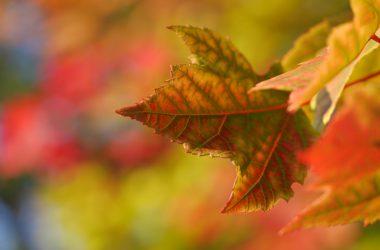 Wonderful Autumn Wallpaper