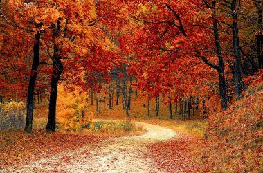 Beautiful Autumn Photo