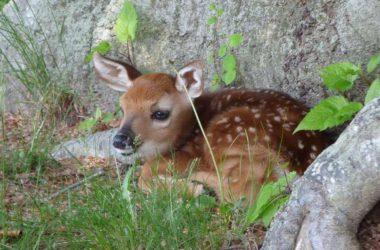Best Baby Deer