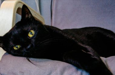 Free Black Cat