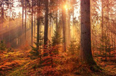 Landscape Autumn Photo