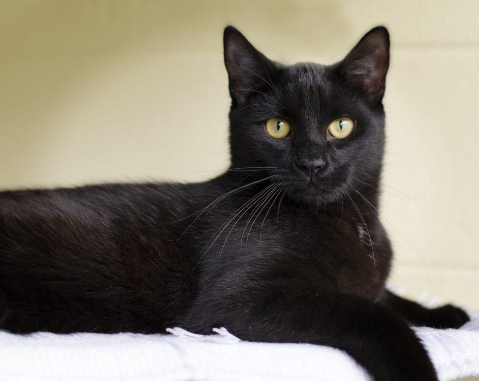 Very Rare Black Serval Cat Spotted in Kenya - Catman