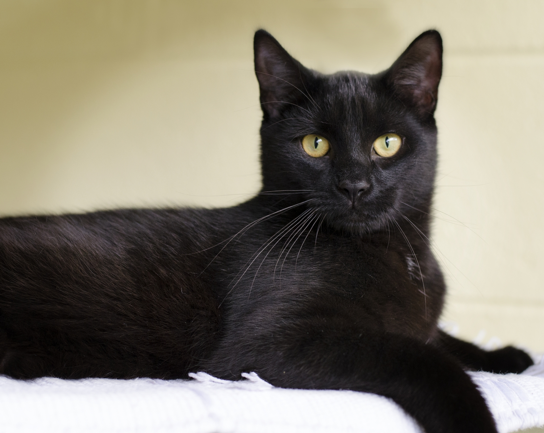 Nice Black Cat