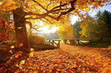 Small Bridge Autumn Backgrounds