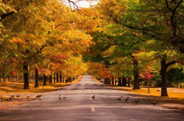 Widescreen Autumn Photo