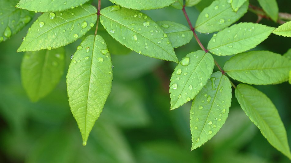 Best Green Leaves
