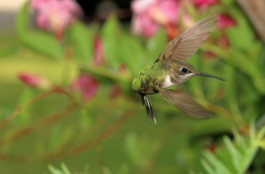Free Flying Hummingbird