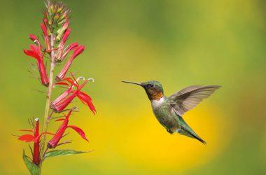 Natural Flying Hummingbird