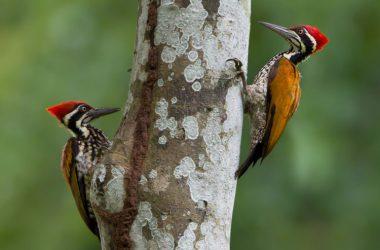 Nice Woodpecker