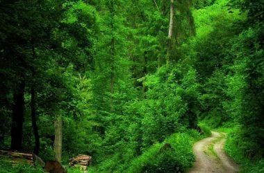 Wonderful Forest Wallpaper