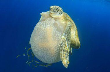 Animal Turtle Image