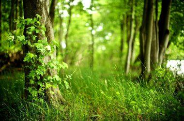 Beautiful Forest Wallpaper