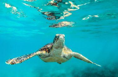 Best Turtle Image