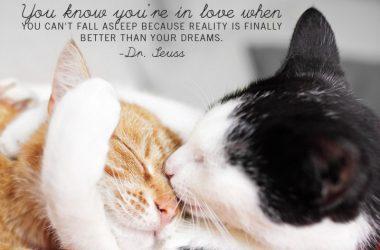 Free Love Quote