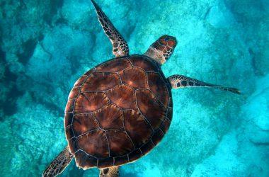 Free Turtle Image