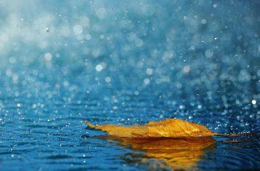 Leaf Raining Wallpaper