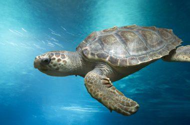 Wonderful Turtle Image