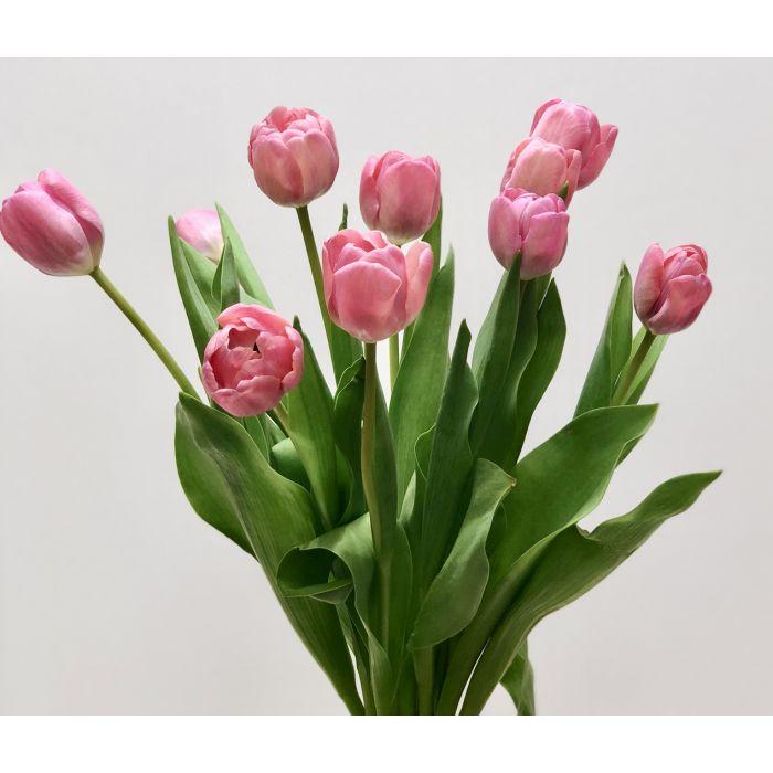 Top Pink Tulip