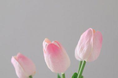 Widescreen Pink Tulip