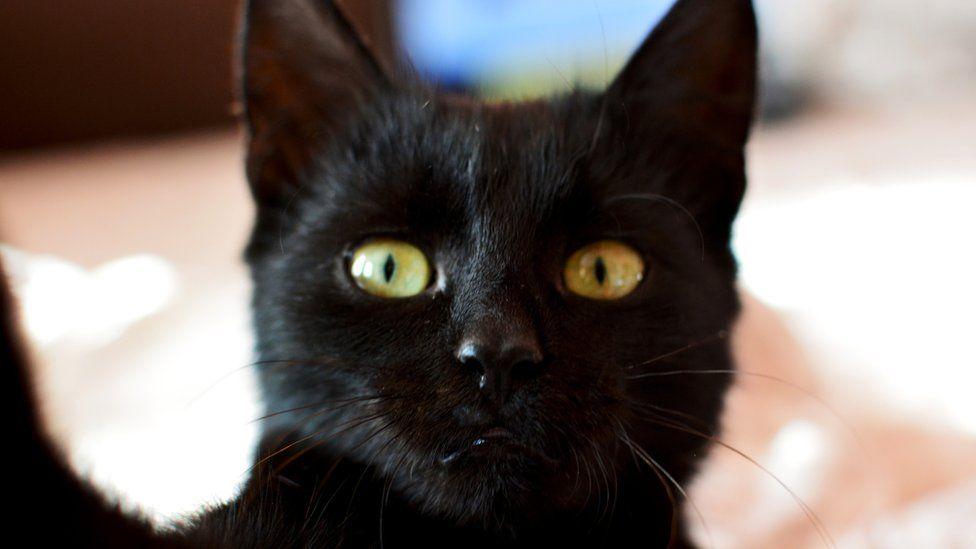 Wonderful Black Cat 33372