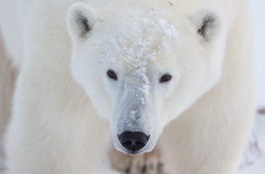 Wonderful White Bear