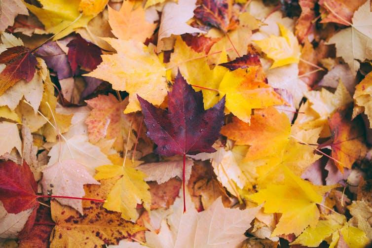 Beautiful Autumn Leaves 33627