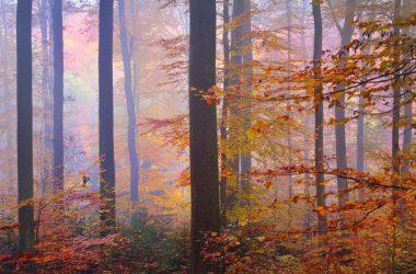 Free Autumn Leaves
