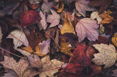 Landscape Autumn Leaves