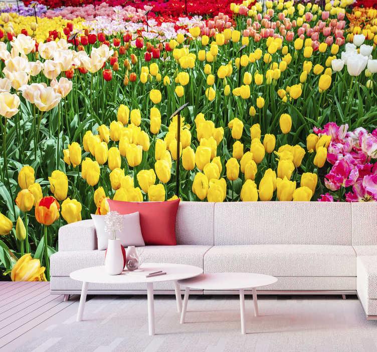 Nice Tulip Flower