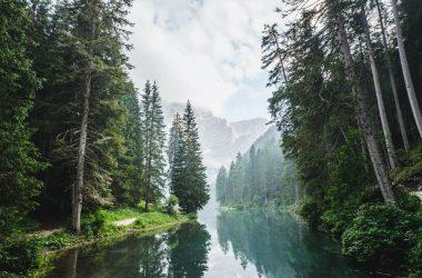 Top Forest Wallpaper