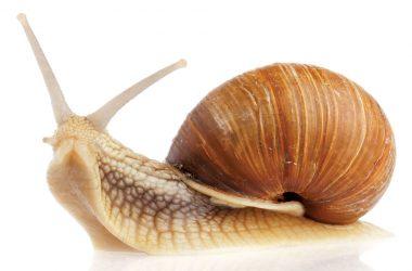 Amazing Snail Image