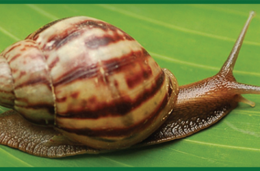 Brown Snail Image