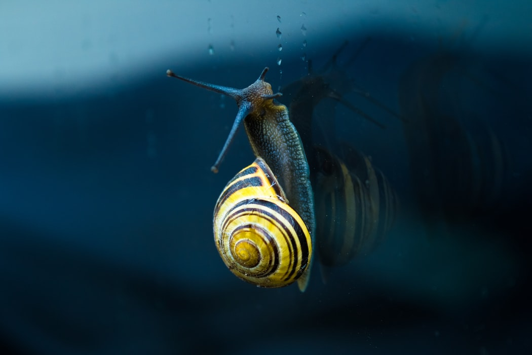 Super Snail Image