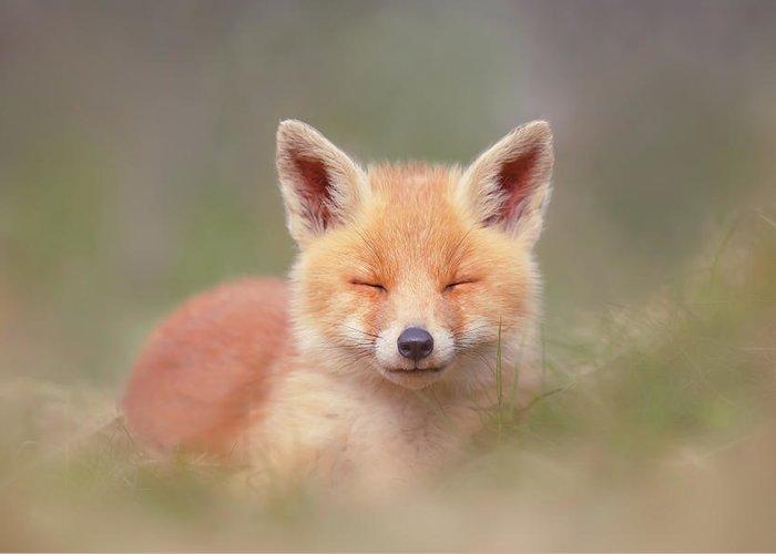 Best Baby Fox