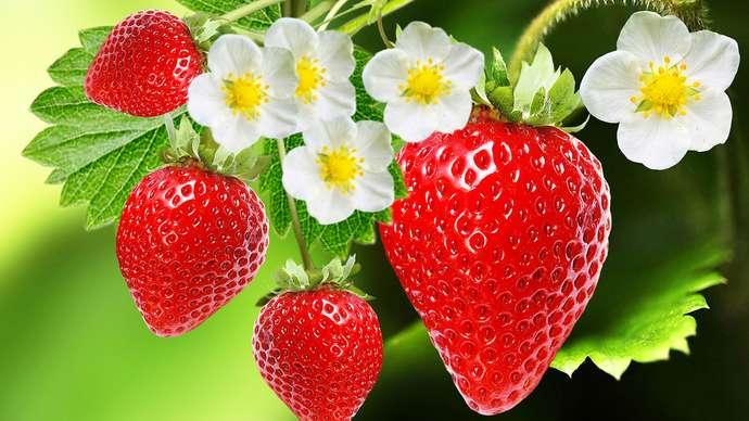 Best Strawberry