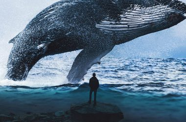 Best Whale Wallpaper