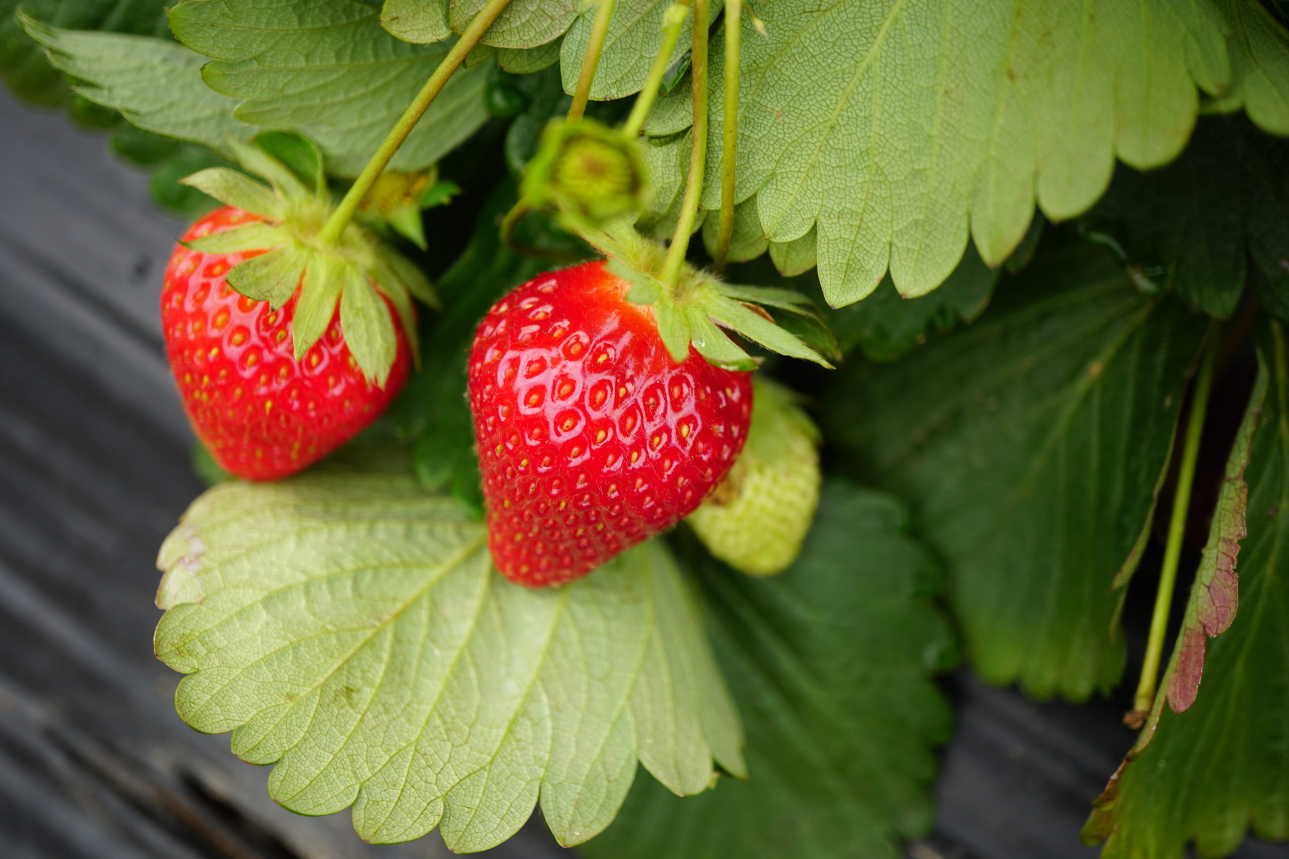 Natural Strawberry