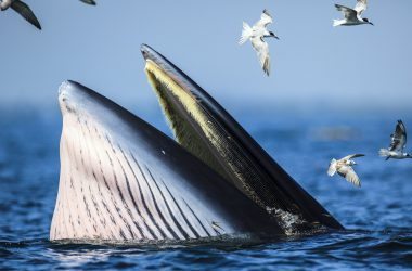 Nice Whale Wallpaper
