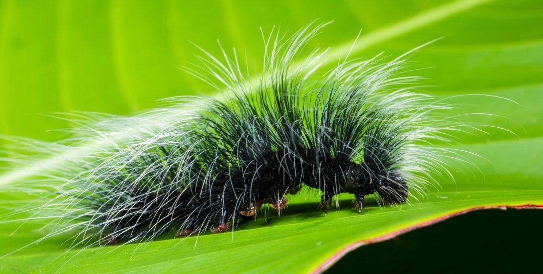 Wonderful Caterpillar