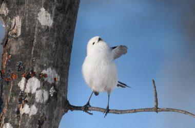 Beautiful Japanese Bird
