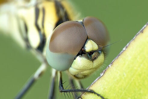 Best Dragonfly