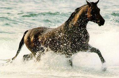 Cool Running Horse