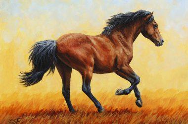 Free Running Horse