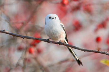 Lovely Japanese Bird